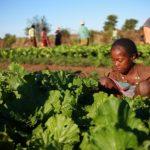 فرنسا تستضيف قمة تهدف لدعم القارة الأفريقية